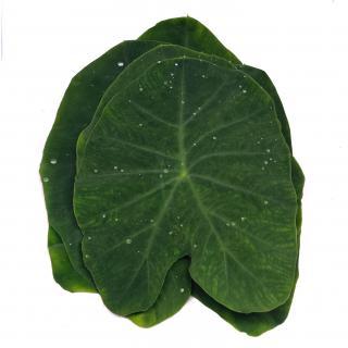 Alu Leaves